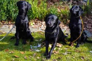 Miro, Lily und Grace bei der Fotosession im Garten