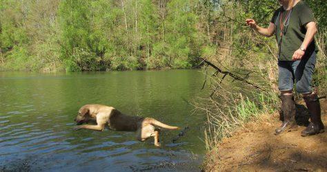 Wasserarbeit für Ida und Balu
