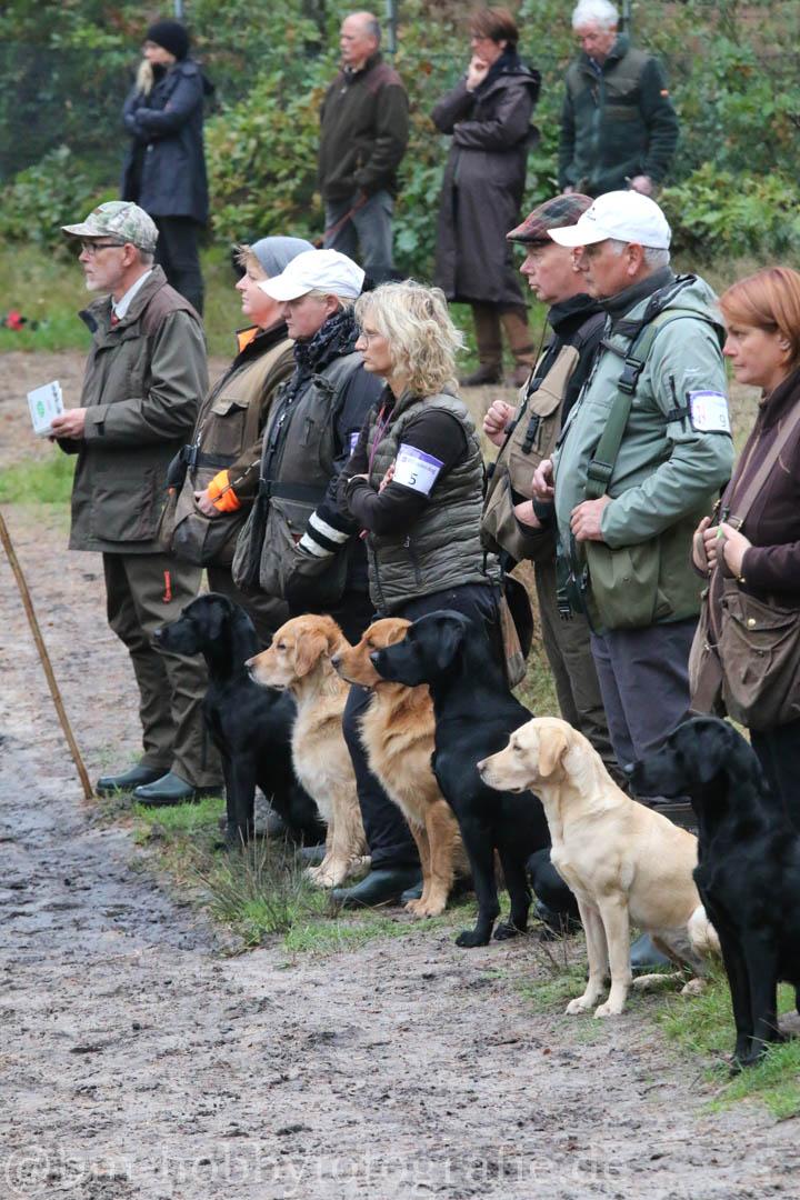 14 Hunde abgeleint in der Line