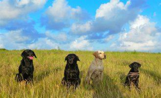 4 Hunde in Dänemark