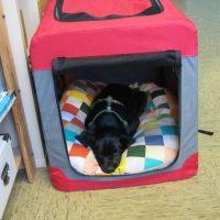 Coco beginnt Ausbildung als Therapiehund